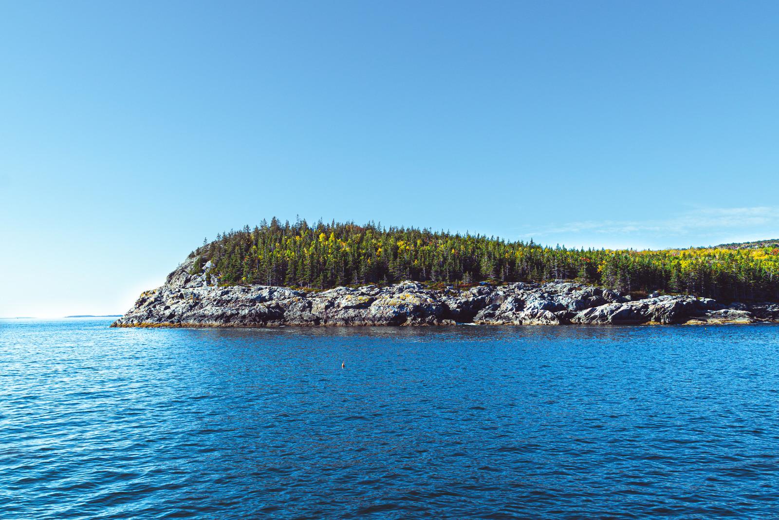 Forêt bord de mer