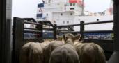 Bloqueo del Canal de Suez: repensar el transporte de alimentos y ganado